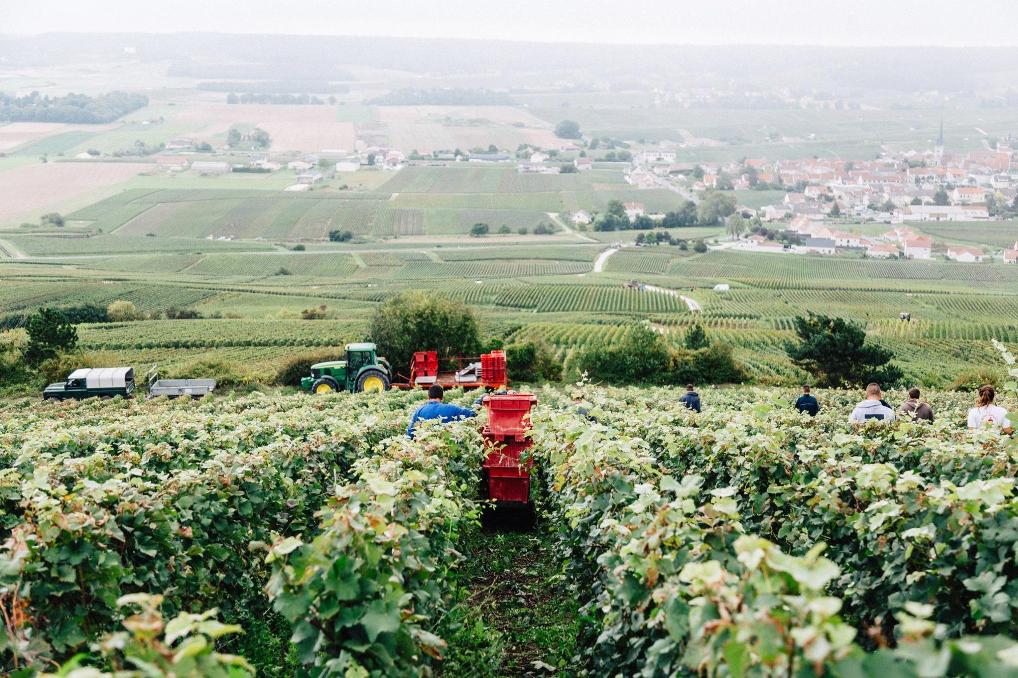 Photographie Vendange Champagne